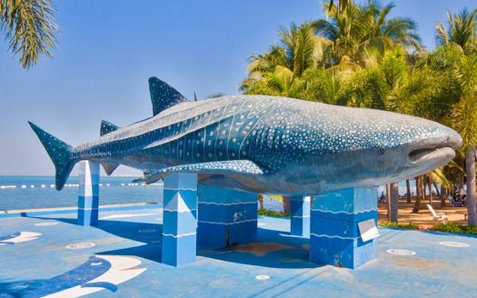 Bang Saray whale statue